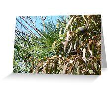 Silvereye in Mistletoe Greeting Card