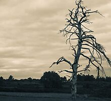 Dead Tree - Ashdown Forest by Steve Churchill