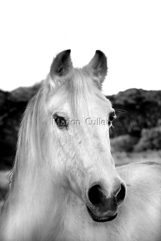 Pegasus, But You Can Call Me Horse by Marion  Cullen