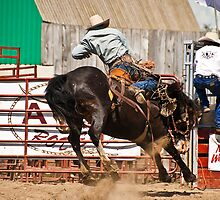 Bronc Riding 2 by Sue Ratcliffe
