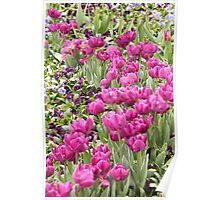 Wave of Tulips Poster