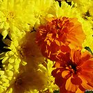 Fall Blossoms by BillK