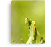 Try Me Canvas Print