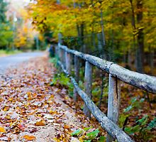 Autumn Fence by Tim Ray