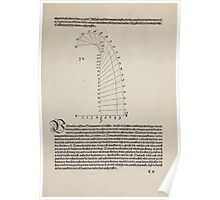 Measurement With Compass Line Leveling Albrecht Dürer or Durer 1525 0033 Rays and Curves Poster