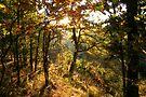 Sooo Autumn by NatureGreeting Cards ©ccwri