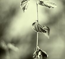 _life is forgetting by Larry  Stewart