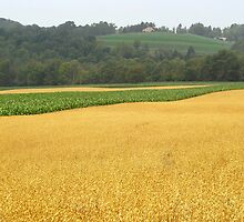 Fields of Gold by vigor
