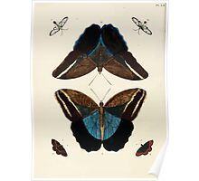 Exotic butterflies of the three parts of the world Pieter Cramer and Caspar Stoll 1782 V1 0246 Poster