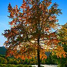 October's Glow by Aimee Stewart