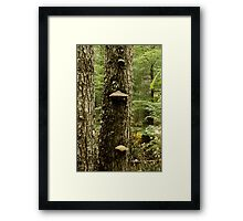 Tree Growth Framed Print