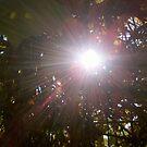 Sunny Day by Lady  Dezine