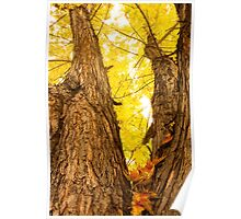 Maple Tree Three Poster