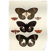 Exotic butterflies of the three parts of the world Pieter Cramer and Caspar Stoll 1782 V2 0319 Poster