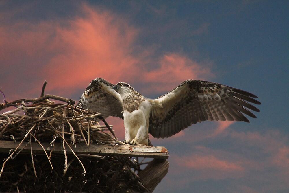 My Griffin Like Raptor by byronbackyard