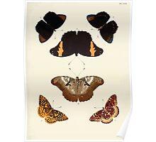 Exotic butterflies of the three parts of the world Pieter Cramer and Caspar Stoll 1782 V1 0263 Poster