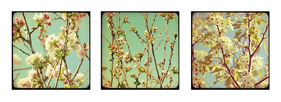 Spring Blossoms x3 by Jane McLean