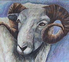 Study of Rams Head by Caroline Maddison