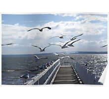 Flight of seagulls, Grantville beach, Victoria Poster