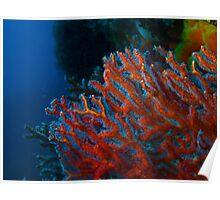 rottnest island corals Poster