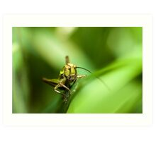 Cricket on grass Art Print