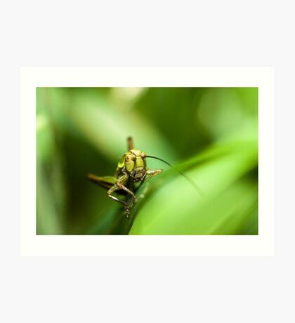 Cricket on grass Art Print