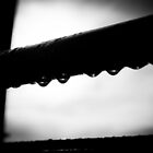 Water Droplets B&W by Chris West