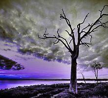 Violet Dream by Joel Aston