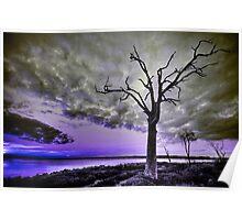 Violet Dream Poster
