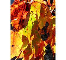 Fabulous Fall Photographic Print