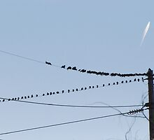 Birds On A Wire - Perceptions by zwrr16