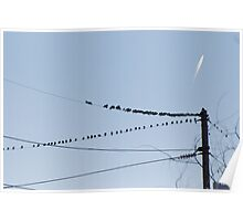 Birds On A Wire - Perceptions Poster