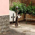 Italian Street Cats by Deborah Downes