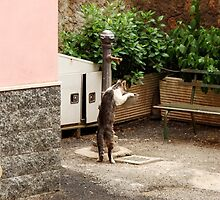 Refreshment Time-Nepi, Italy by Deborah Downes