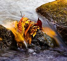 Crum Creek - Fall Leaves by alseymour
