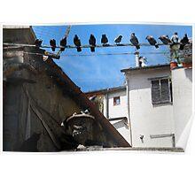 Bird Watch-Arezzo, Italy Poster
