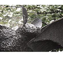Bat! Photographic Print