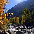 Fall Morning Sun by Debbie Roelle