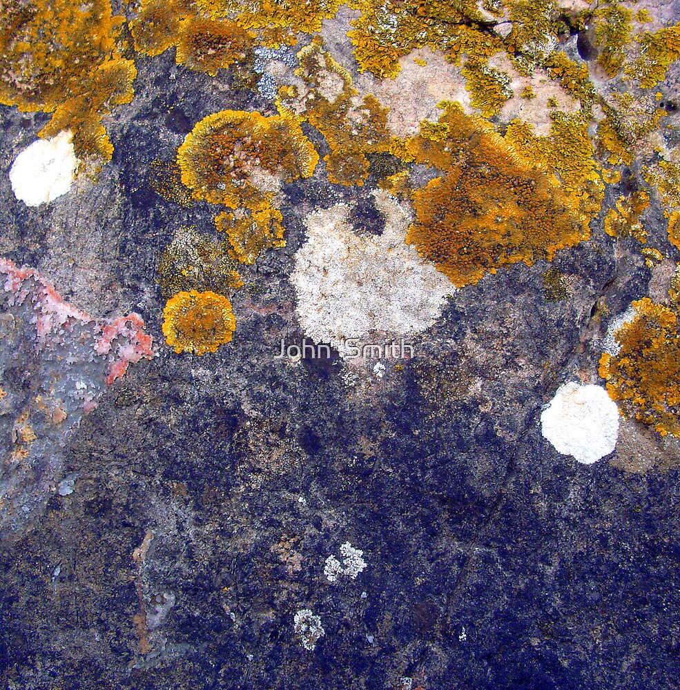Lichen on rock. by John  Smith