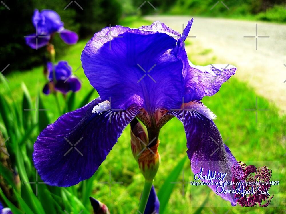 blue iris magic by LoreLeft27