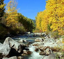 Entiat Fall Shoot II by Debbie Roelle