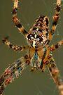 Arachnophobia! by Gene Walls