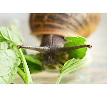 Snail in Macro Photographic Print
