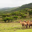 Arabian Paradise by Omar Dakhane