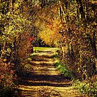 October Colors by Vickie Emms