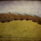 autumn waves by Catherine Hadler