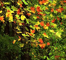 Late Day Light in Autumn by RC deWinter