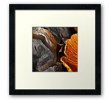 Gills, on wood Framed Print