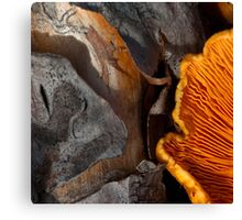 Gills, on wood Canvas Print