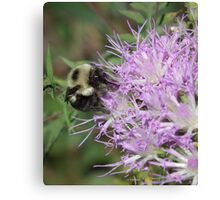 Bumbling Along Canvas Print